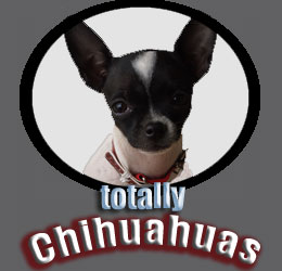 totally chihuahuas